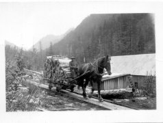 12048-Horse-on-Tracks-Pulling-Wood
